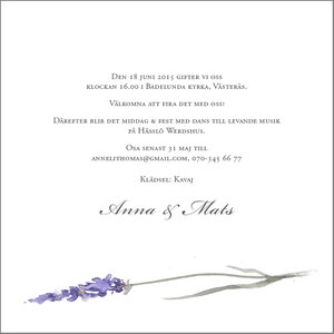 Lavendel kvadrat